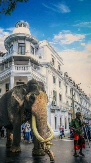 Обои на телефон шри, слон, ланка, животные, арт, yonder, sri lanka raja, art