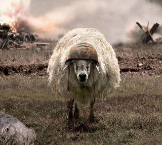Обои на телефон овца, война
