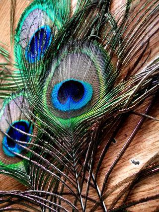 Обои на телефон павлин, реал, птицы, перья, перо, вдохновение, pene, peacocks, paun