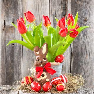 Обои на телефон яйца, празднование, украшение, тюльпаны, пасхальные, кролик, красые, декор, easter decoration, bunny tulips