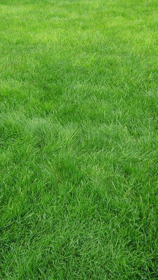 Обои на телефон трава, природа, grass hd