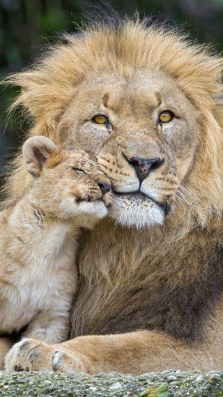 Обои на телефон лев, laion, icio