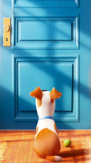 Обои на телефон секрет, питомцы, макс, анимация, жизнь, secret life of pets