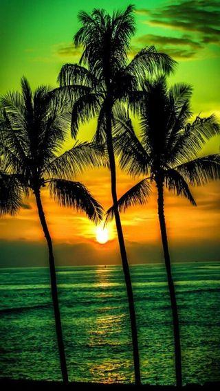 Обои на телефон пальмы, закат, vcx, palms sunset