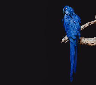 Обои на телефон попугай, любовь, love