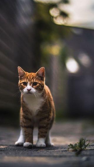 Обои на телефон улица, кошки, ginger