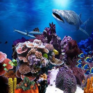 Обои на телефон акула, рыба, океан, море, кораллы, вода, reef, aquatic