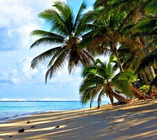 Обои на телефон пальмы, пляж, tre, hd