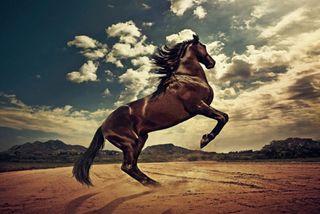 Обои на телефон лошадь, прекрасные