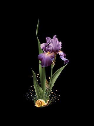 Обои на телефон сад, черные, фиолетовые, приятные, природа, прекрасные, весна, snail, beautiful  iris