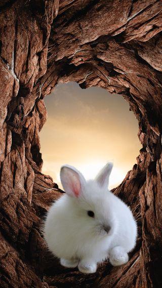 """Обои на телефон отверстие, кролики, небо, космос, животные, горы, белые, space"""", Rabbit, Ozart, """"Rabbit"""