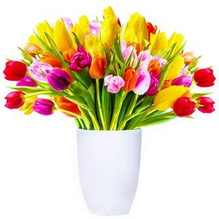 Обои на телефон свежие, цветы, фон, тюльпаны, прекрасные, красочные, tulipc, fresh tulips