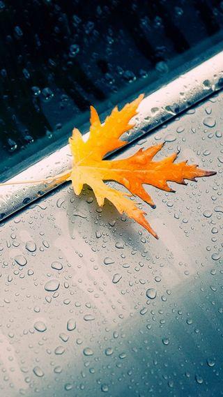 Обои на телефон упавший, природа, осень, мокрые, макро, листья, капли дождя, 1080p