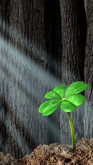 Обои на телефон один, цветы, святой, свет, патрик, лес, зеленые