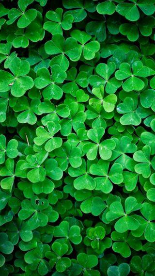 Обои на телефон удача, ирландские, листья, ирландия, зеленые, везучий, four, clovers, charm, 4 leaf clovers