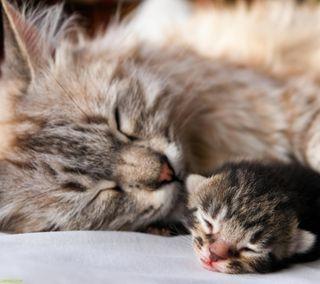 Обои на телефон любовь, кошки, котята, коты, животные, love