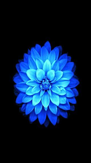Обои на телефон лотус, цветы, синие, сильный, прекрасные, другие, hd blue lotus flower, culture