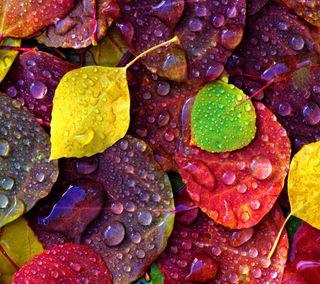 Обои на телефон осень, оптимус, листья, дерево, lg, fall leaves