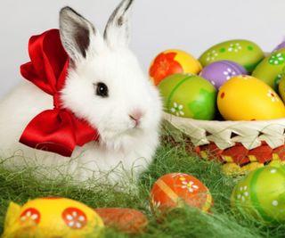 Обои на телефон яйца, пасхальные, счастливые, кролики, весна, 960x800px