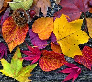 Обои на телефон осень, цветные, сезон, природа, листья