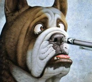 Обои на телефон питомцы, собаки, забавные, животные