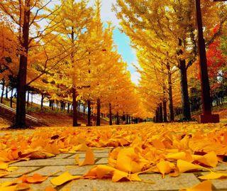Обои на телефон осень, листья, деревья, дерево, avenue, autumn avenue