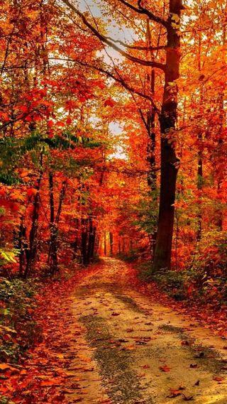 Обои на телефон лес, пейзаж, люмия, дорога, hd, 1520, 1080x1920