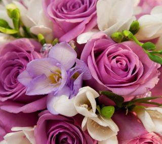 Обои на телефон цветы, fragrance