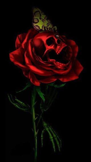 Обои на телефон ненависть, череп, розы, любовь, грустные, love hate