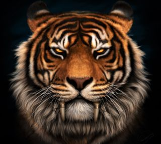 Обои на телефон тигр