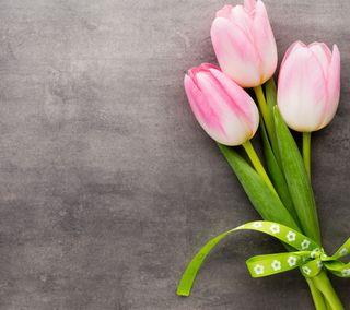 Обои на телефон тюльпаны, цветы, розовые