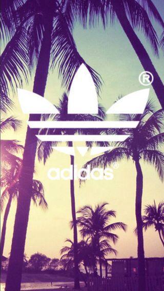 Обои на телефон пальмы, логотипы, деревья, бренды, адидас, adidas