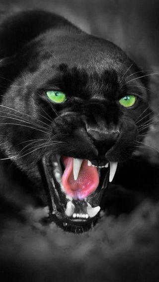 Обои на телефон дикие, черные, пантера, злые, животные, безумные