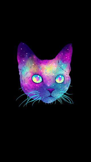 Обои на телефон кошки, милые, красочные