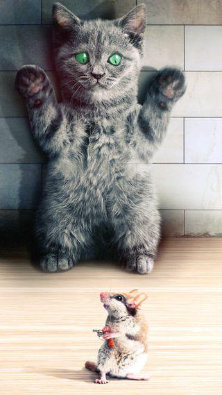 Обои на телефон юмор, чат, маус, кошки, souris, humour