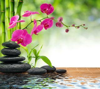 Обои на телефон relaxing spa, вода, цветы, камни, отражение, дзен, релакс, спа, бамбук, расслабляющие