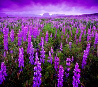 Обои на телефон поле, цветы, flower  field