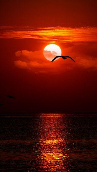 Обои на телефон вечер, облака, море, красые, seagull
