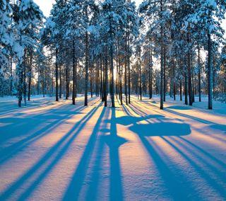 Обои на телефон восход, приятные, взгляд, winterforest sunrise