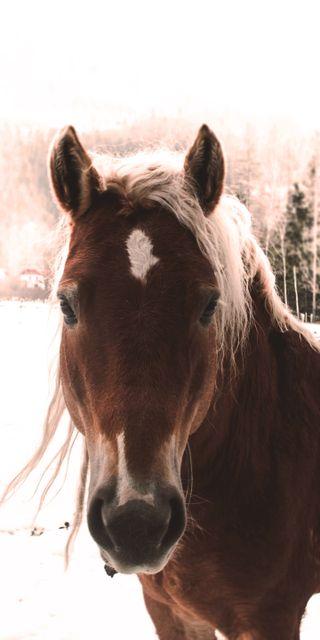Обои на телефон лошадь, животные