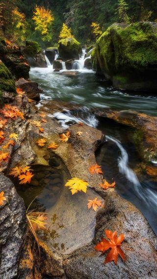 Обои на телефон река, природа, пейзаж, новый, листья, лес, камни, естественные, hd