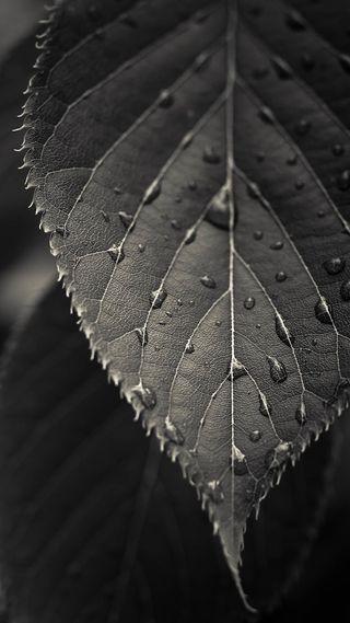 Обои на телефон черные, листья, капли, галактика, абстрактные, note3, galaxy