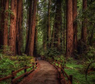 Обои на телефон путь, лес, дорога, дерево, woody path, redwood
