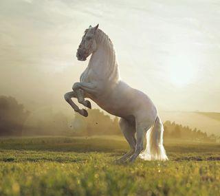 Обои на телефон питомцы, естественные, новый, лучшие, лошадь, животные, белые, ever
