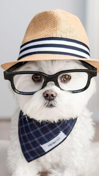 Обои на телефон щенки, собаки, милые, любовь, love