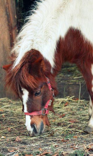 Обои на телефон пони, лошадь, животные