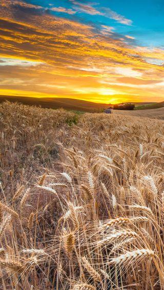 Обои на телефон страна, рассвет, пшеница, бок, country side