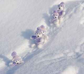 Обои на телефон холод, фан, снег, сезон, приятные, природа, милые, медведь, медведи, крутые, snow bears, icy