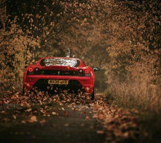 Обои на телефон лес, машины, cars of forest