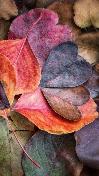 Обои на телефон осень, сердце, листья